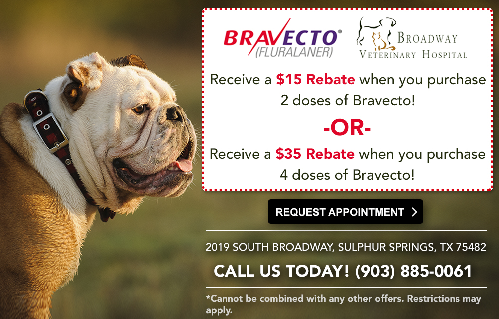Broadway Veterinary Hospital Bravecto Special